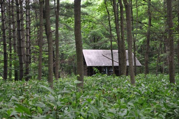 (看到森林中的房子了!)