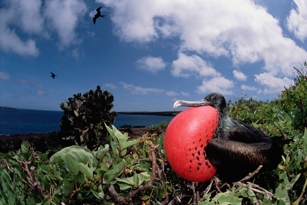 自然探索·亚马逊河热带雨林 加拉帕戈斯群岛 丰富多样生物摄影邮轮18