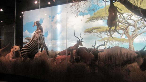 石油化工炼制模型 与能源馆毗邻的是古生物馆。这是一个具有震撼力的展馆。这里主要展出了三大类古生物化石:恐龙、海洋古生物和木化石。60多个完整的恐龙骨架耸立在大厅内,包括最新发现的霸王龙、梁龙和三角龙。置身其中犹如来到了侏罗纪,俨然面前就是一个巨大的恐龙军团。与恐龙巨大的身躯相比,三叶虫、鱼类、螺、贝以及海洋植物等海洋古生物就显得格外地小。但是当你站在这些发掘出来的化石前面,就会为它们经过世纪尘封却依然栩栩如生而感叹。木化石带给我们的不是恐龙的震撼,也不是海洋古生物具有的多样性,而是一种美,大自然鬼斧神工