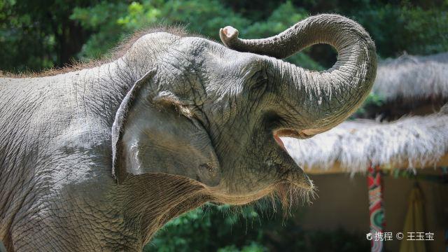 长隆野生动物世界门票