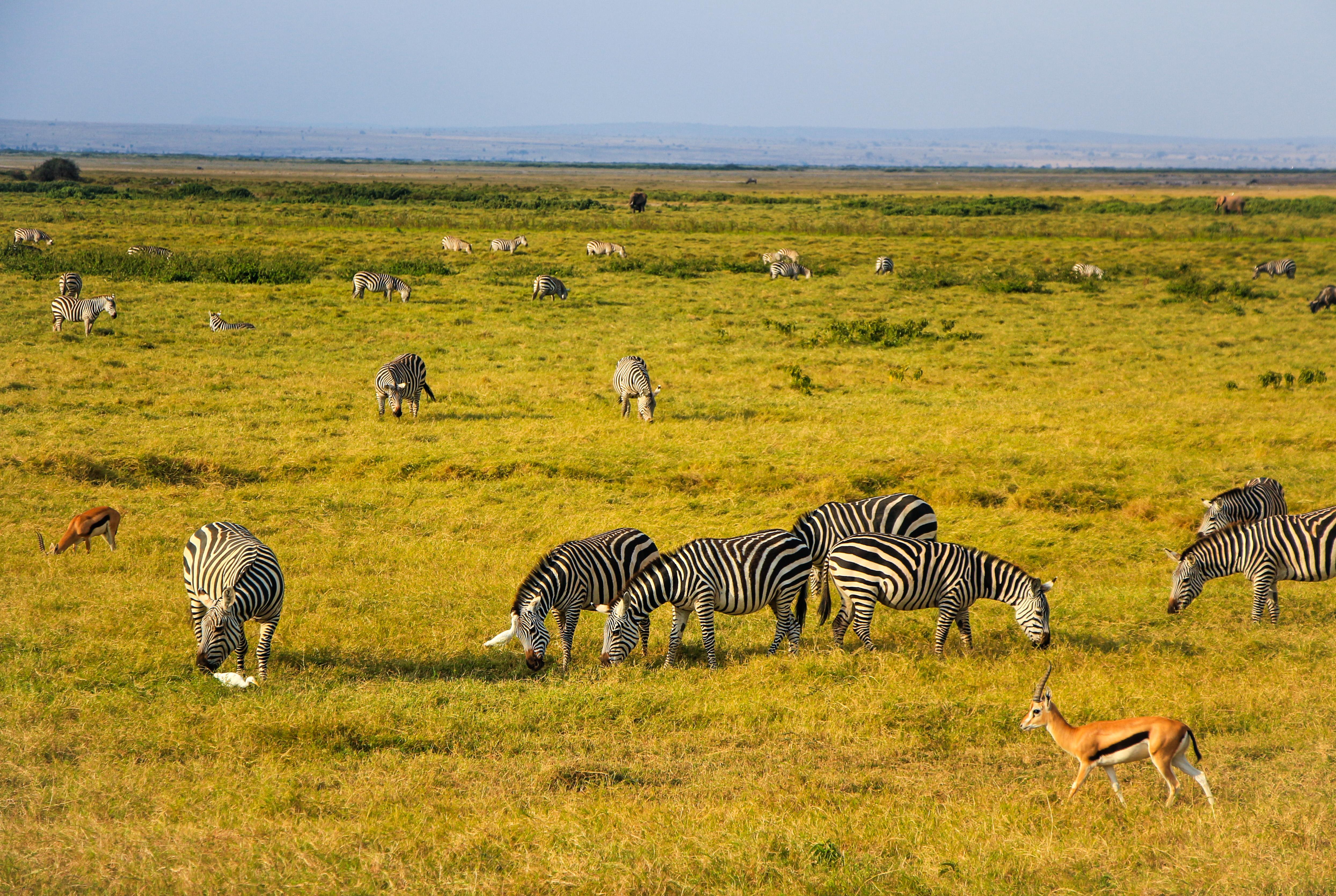 安波塞利国家公园  Ambosele Nation Park   -3