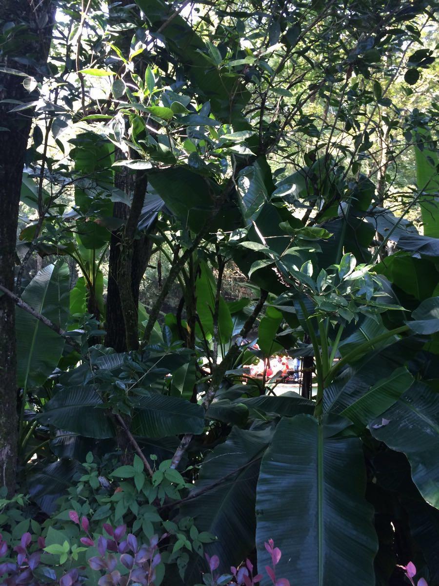 游影城江西的故园是个古色古香的旅游景点。攻略逃脱密室之谜4铗子在哪里故园图片