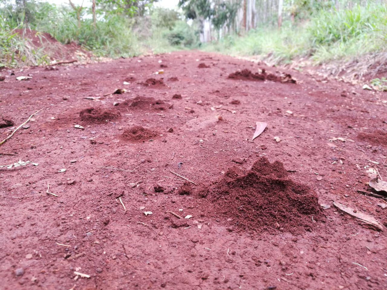 Karura Forest Reserve    -4