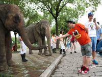 即日-7.4大放价!上海柏思特酒店1晚+上海野生动物园门票【与动物来次亲密接触】