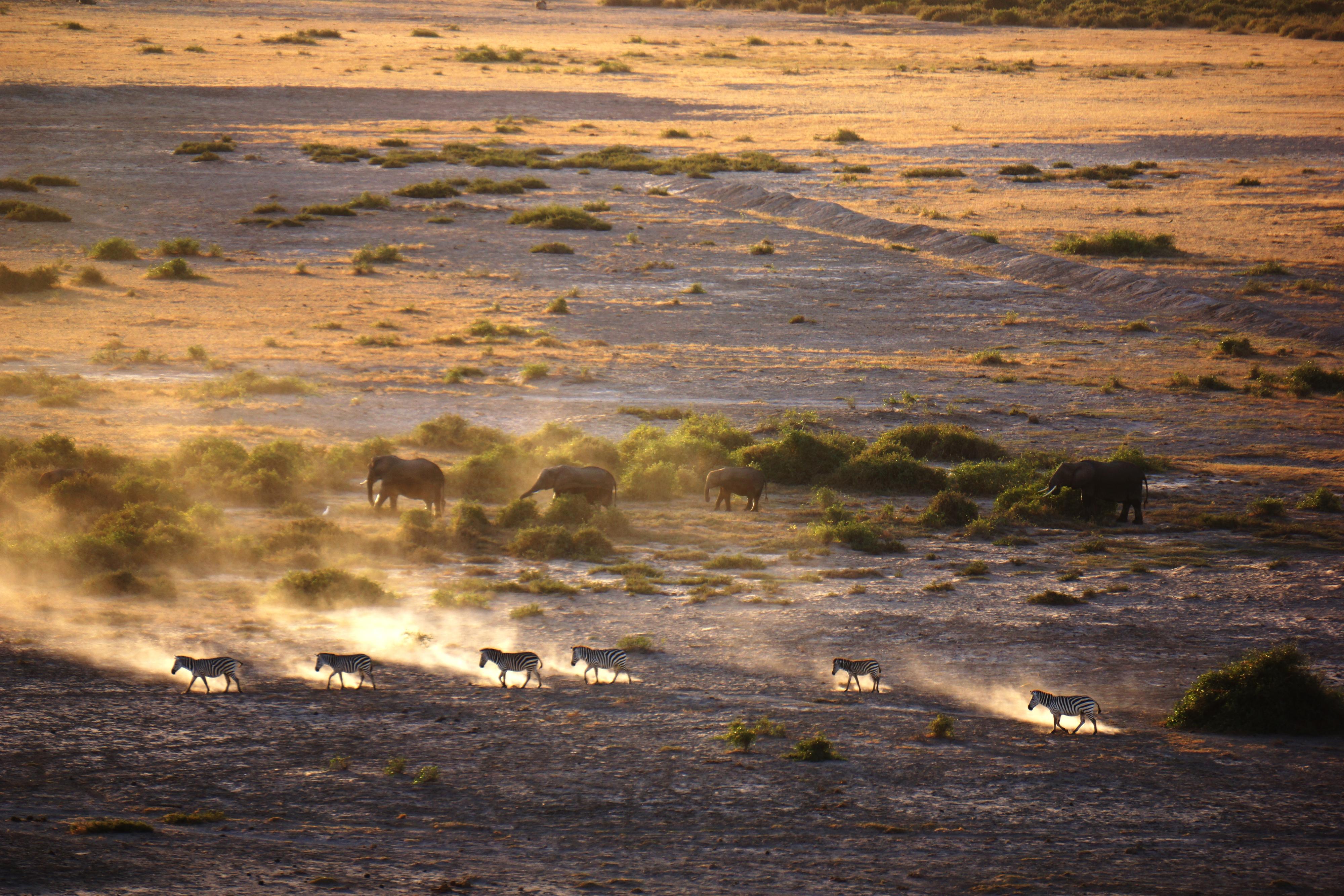 安波塞利国家公园  Ambosele Nation Park   -4