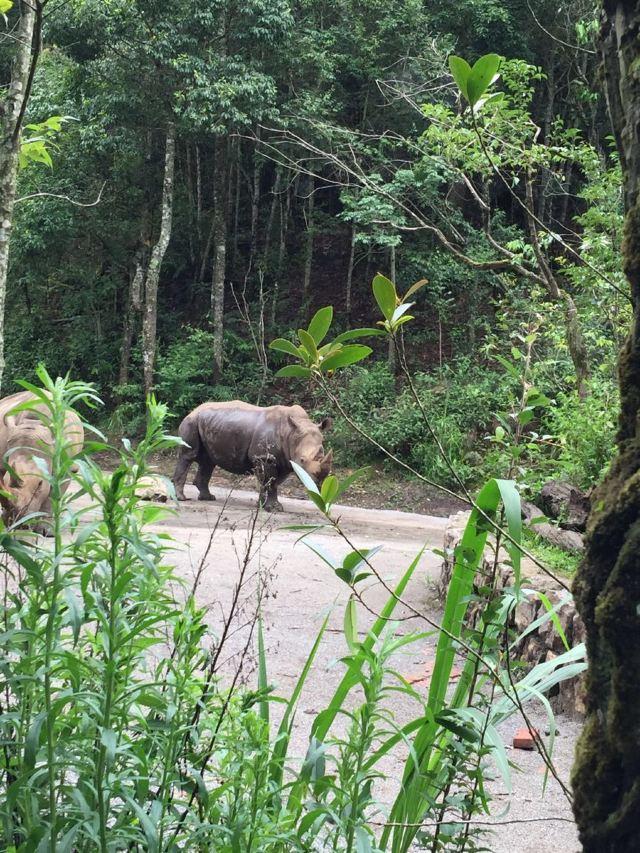 云南普洱国家森林公园