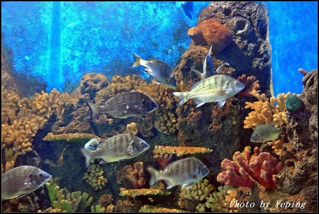 壁纸 海底 海底世界 海洋馆 水族馆 1024_686