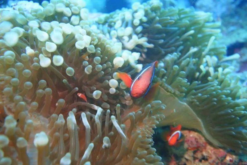壁纸 海底 海底世界 海洋馆 水族馆 800_534