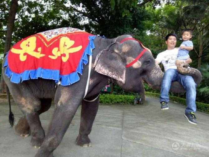 孩子畅游深圳野生动物园