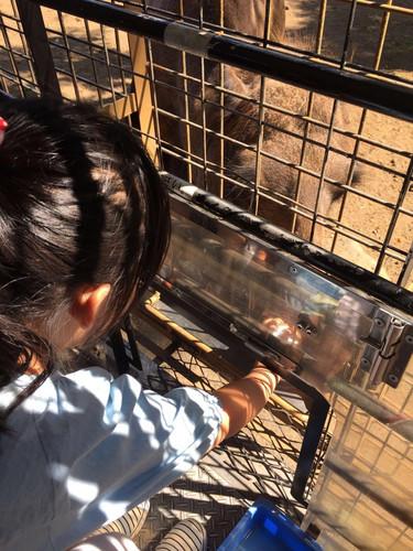 即使隔着铁网喂小动物吃东西