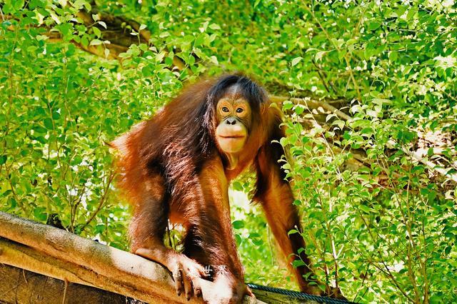 国庆长假周边游 国内第一家野生动物园这几个亮点刺激