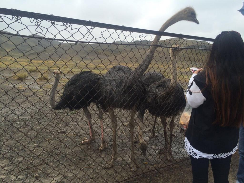 乌市野生动物园雨中游记