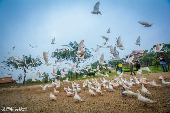 清晨打着一蜜蜂鸽子,一群图片呼啸而来.箩筐立体的折纸大全玉米方法图片