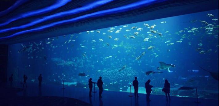 故事,我们看鱼去--珠海横琴海洋世界宝贝游-珠文字亲子游戏攻略图片