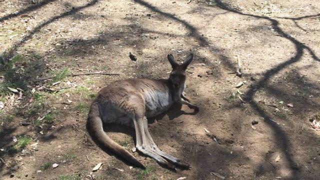 克莱兰德野生动物保护区门票