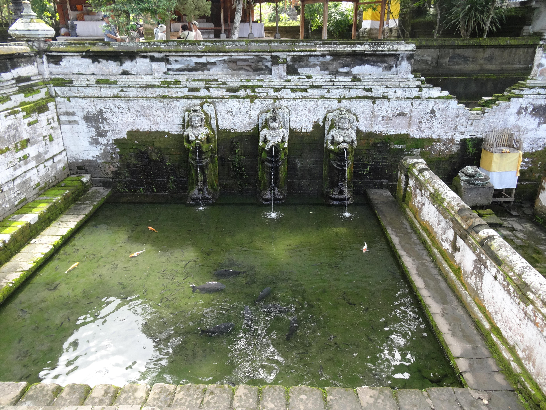 进入鱼池的台阶长满了青苔
