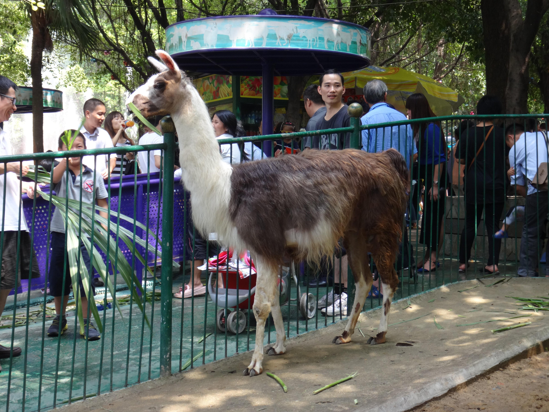 广州动物园和海洋馆一日游