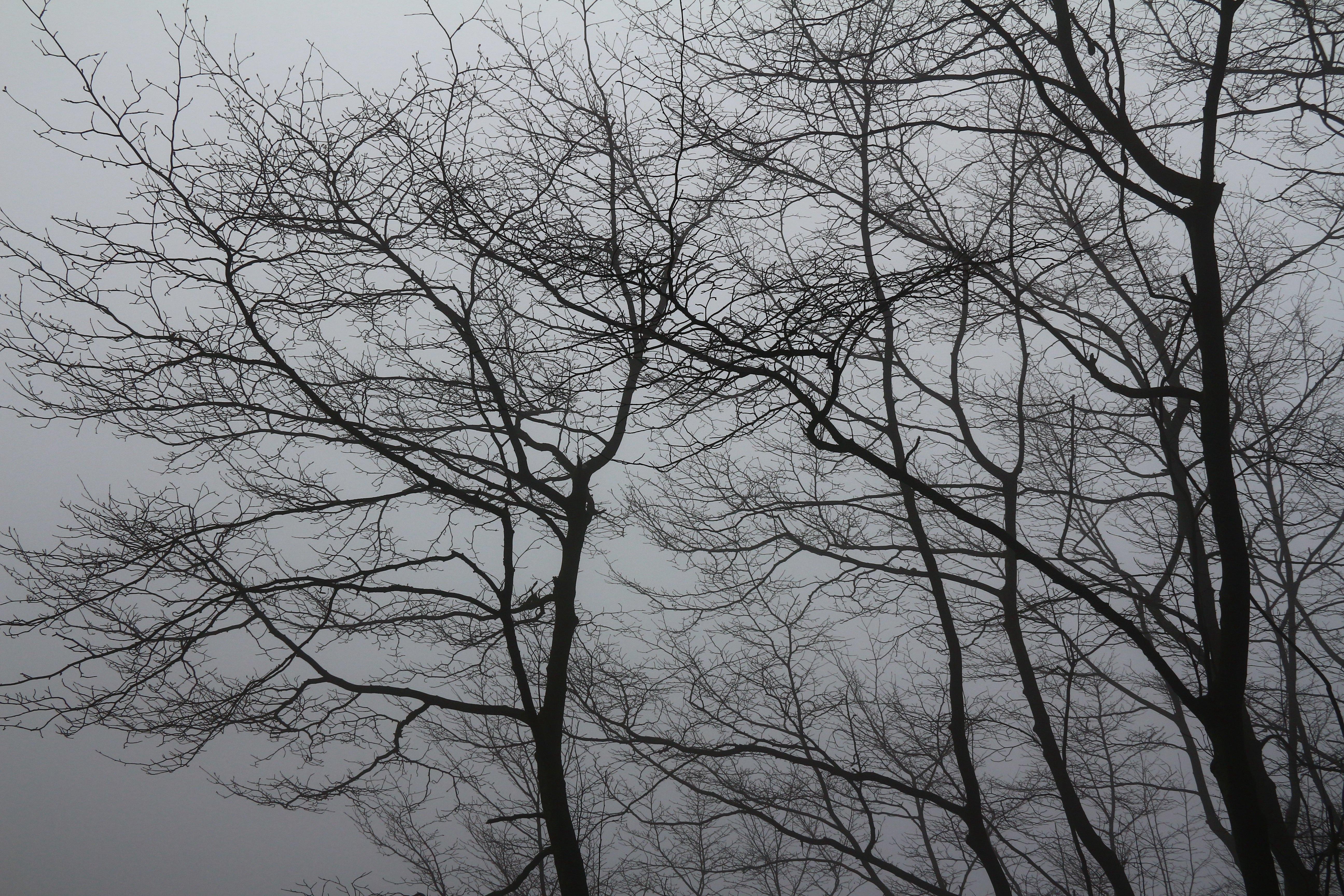 庐山烟雨游