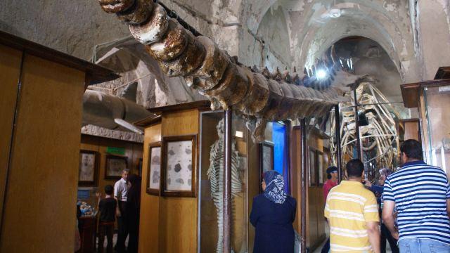 7分 (6条点评) 5 这是一座关于海洋主题的博物馆,同时也陈列着许多与