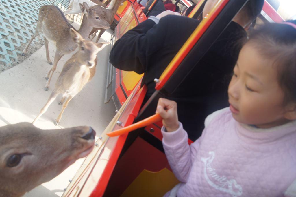 去常州淹城野生动物园吧!