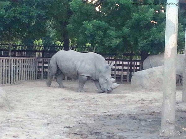 天津动物园,一个承载少儿欢声笑语的地方