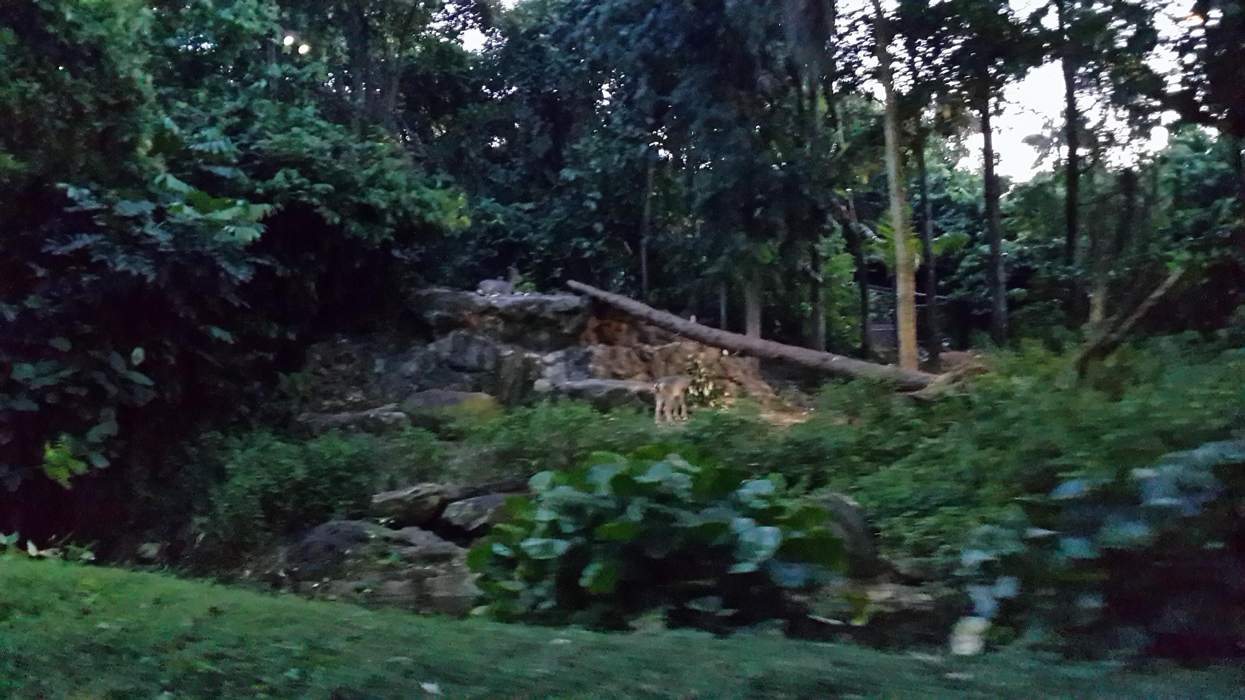 夜间野生动物园 这个一定要体验,可以看到新加坡全景. 新加坡摩天轮