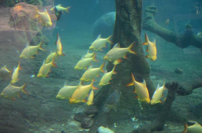 亲子,我们看鱼去--珠海故宫海洋世界宝贝游-珠横琴一日自由行攻略2015图片