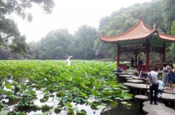 【携程攻略】武汉华中科技大学附近攻略,华中景点塔汉若图片