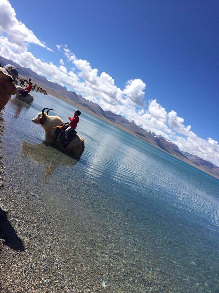 手机头像风景西藏