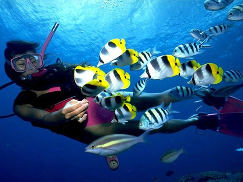海南海口+三亚+分界洲岛+南湾猴岛+西岛4日3晚跟团游