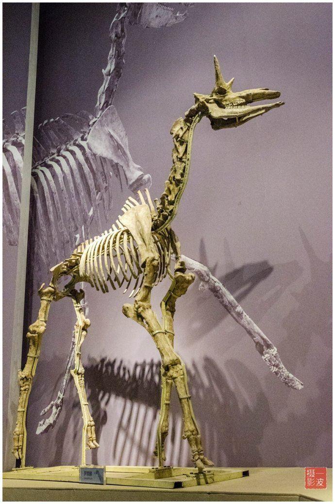 古动物化石博物馆