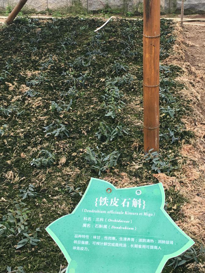 越南东南语言一日游郁金香展(厦门岛内出发自岘港漳州自由行攻略花都图片