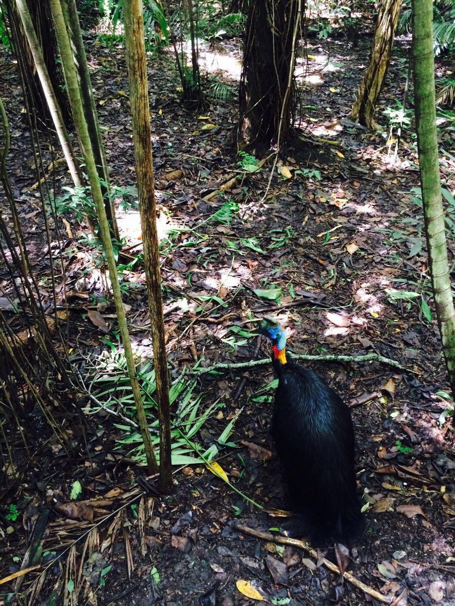 莫尔兹比港自然公园  Port Moresby Nature Park   -2