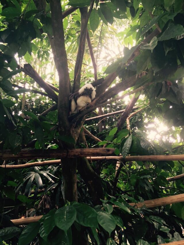 新加坡动物园,走进园内