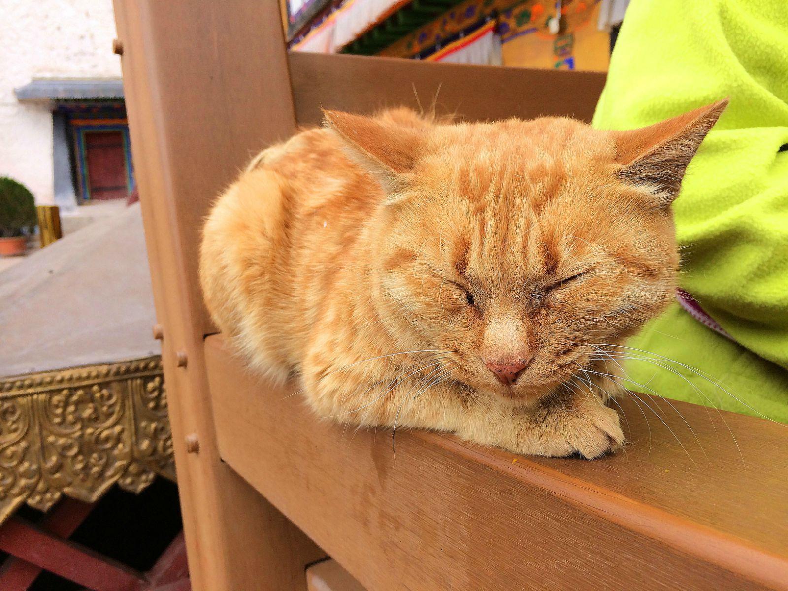 睡懒觉的猫咪图片