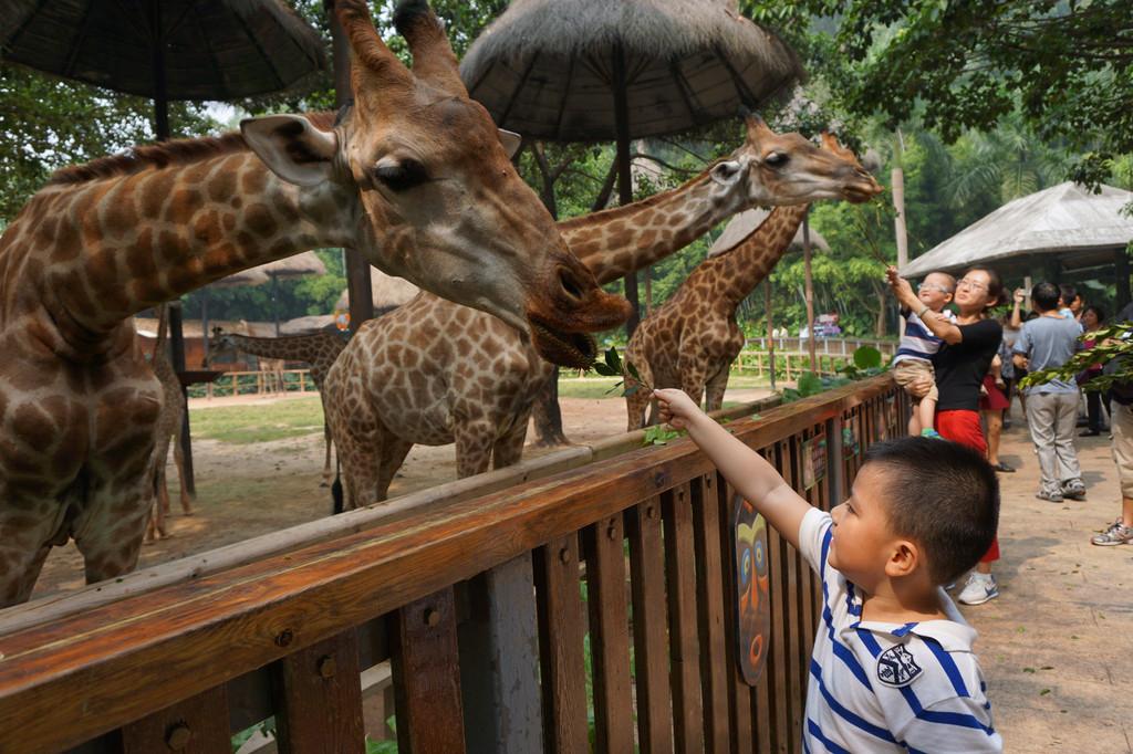 珠海长隆篇(长隆酒店,企鹅酒店,大马戏,野生动物园,海洋王国)