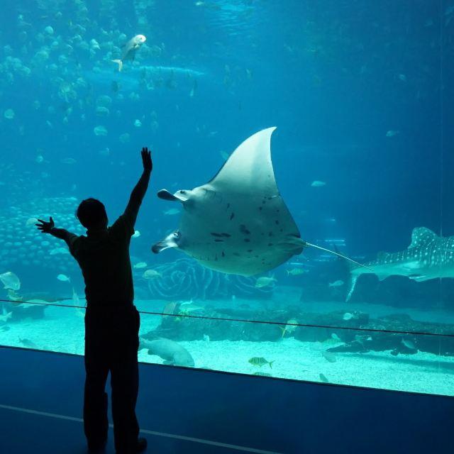 海洋大形动物图片名字