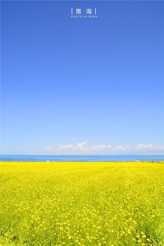 壁纸 草原 成片种植 风景 植物 种植基地 桌面 671_1006 竖版 竖屏