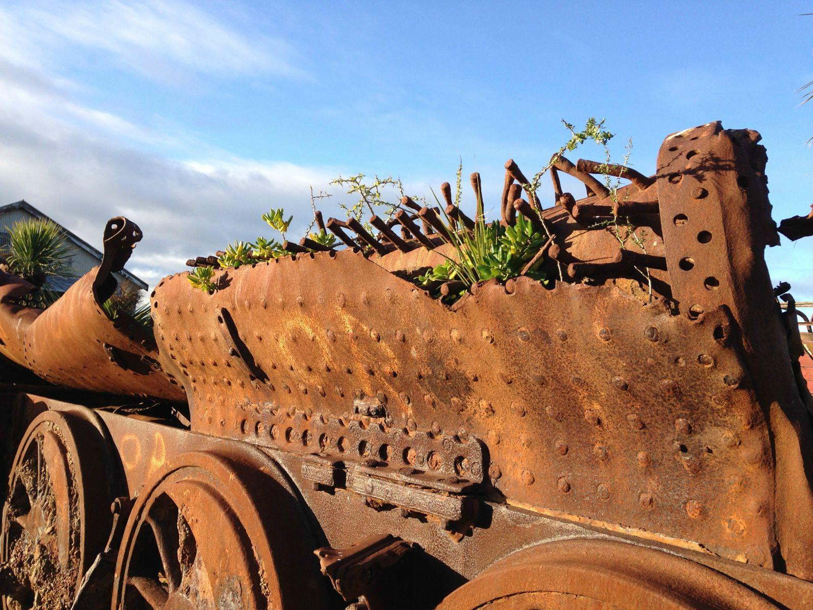 把多肉植物养在生锈的火车残骸上,奥马鲁人的浪漫真是够了!