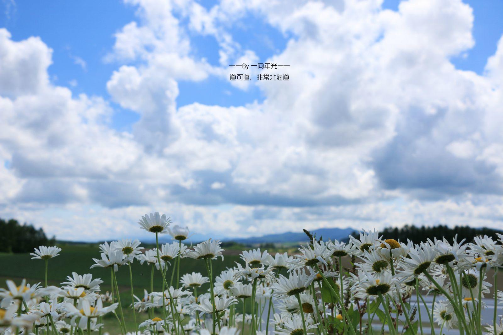 道可道,非常北海道