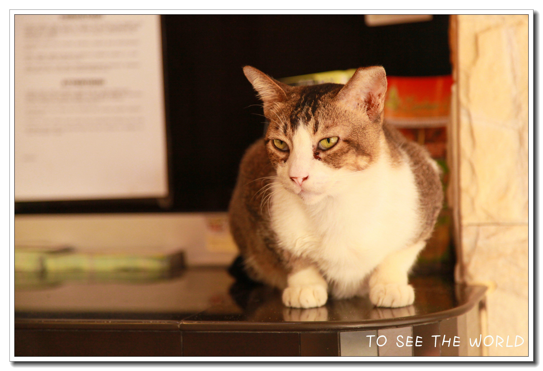 想吃猫咪小孩表情了可爱老板错表情包我图片