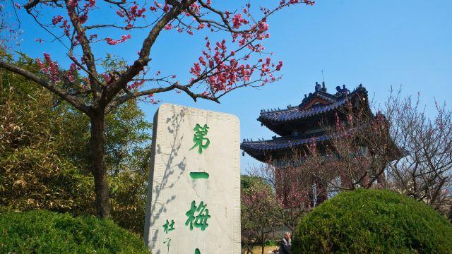 梅花山位于南京钟山风景区南部