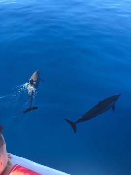 壁纸 动物 海洋动物 桌面 270_360 竖版 竖屏 手机