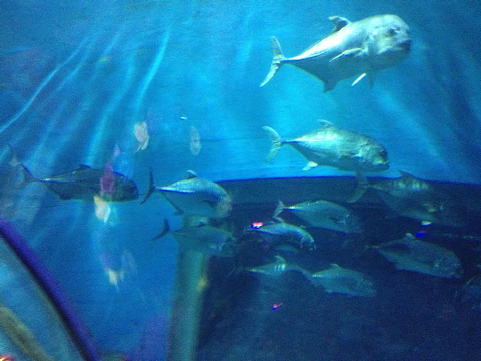 壁纸 海底 海底世界 海洋馆 水族馆 960_720