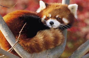 【携程攻略】洛阳万安山野生动物欢乐世界附近景点