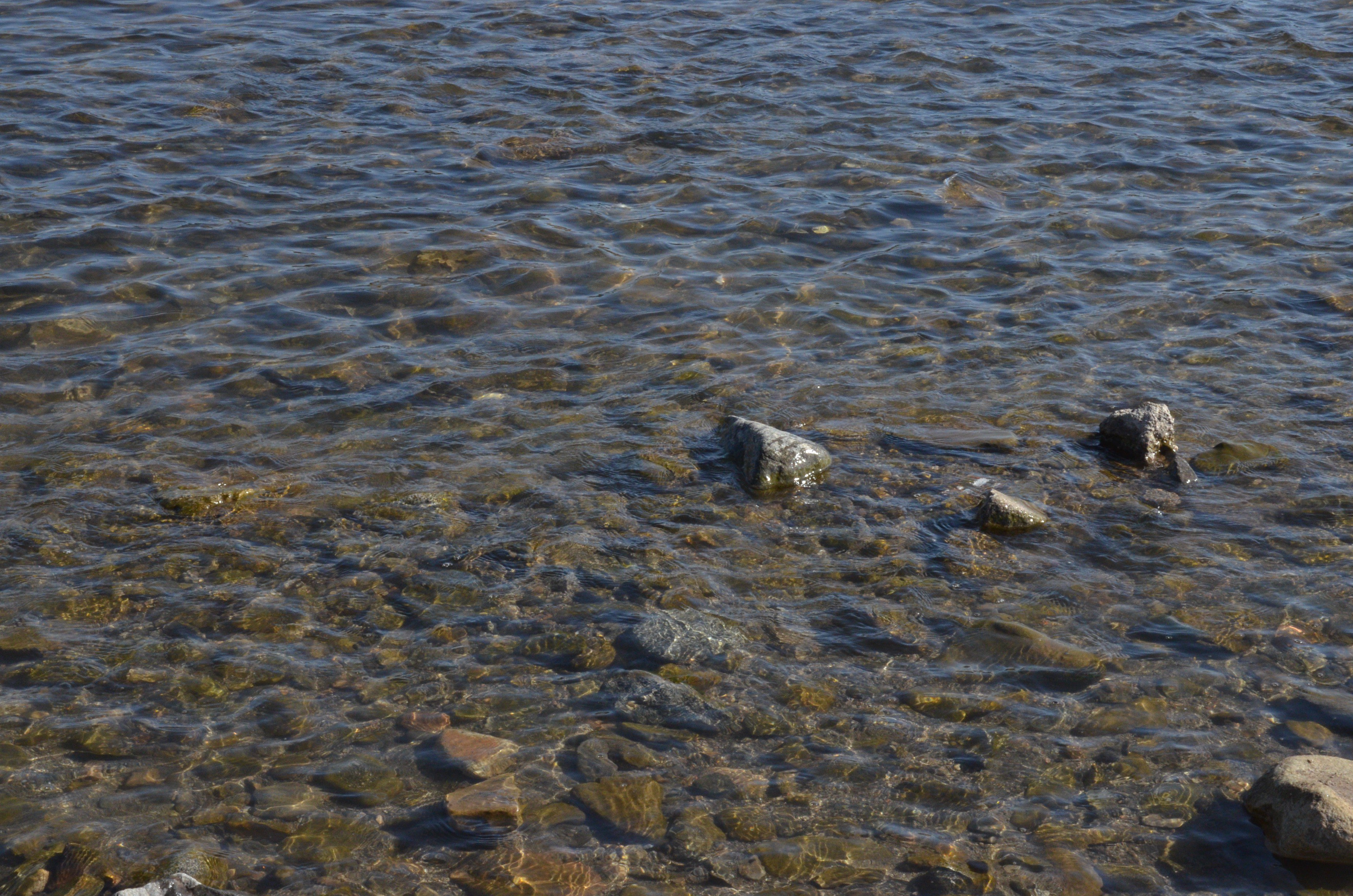 梦见河水上涨好多大鱼