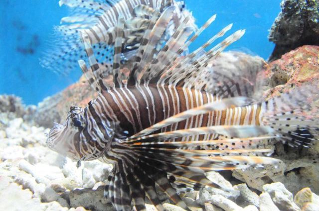 壁纸 动物 海底 海底世界 海洋馆 水族馆 鱼 鱼类 640_424
