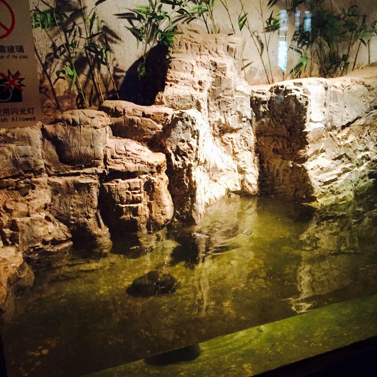 北京动物园位于北京市西城区西直门外大街,占地面积约86公顷,水面8.6公顷。是中国最大的城市动物园,从清光绪三十二年(1906年)至今已有逾百年的历史。 在此安家落户的有中国特产的珍贵动物大熊猫、金丝猴、东北虎、白唇鹿、麋鹿(四不像)、矮种马、丹顶鹤,还有来自世界各地有代表性的动物如非洲的黑猩猩、澳洲的袋鼠、美洲豹、墨西哥海牛、无毛狗、欧洲野牛等。两栖爬虫馆分上下两层楼,内有大小展箱90个,展出世界各地的爬行动物100 多种。