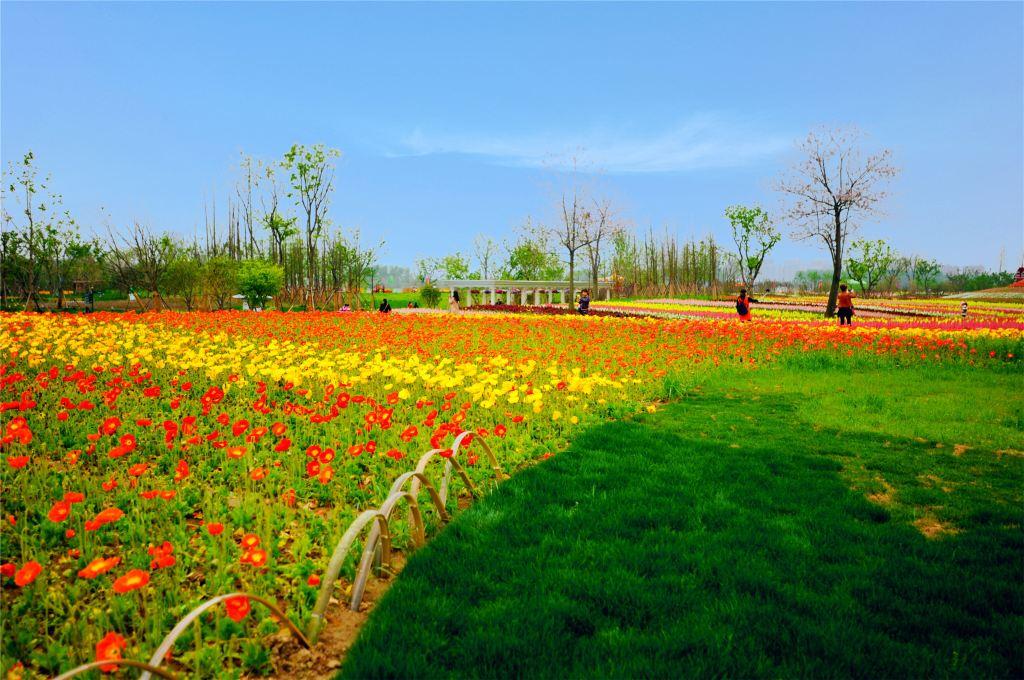 心动春之旅#这个春天,我陪你看一场花海可好?