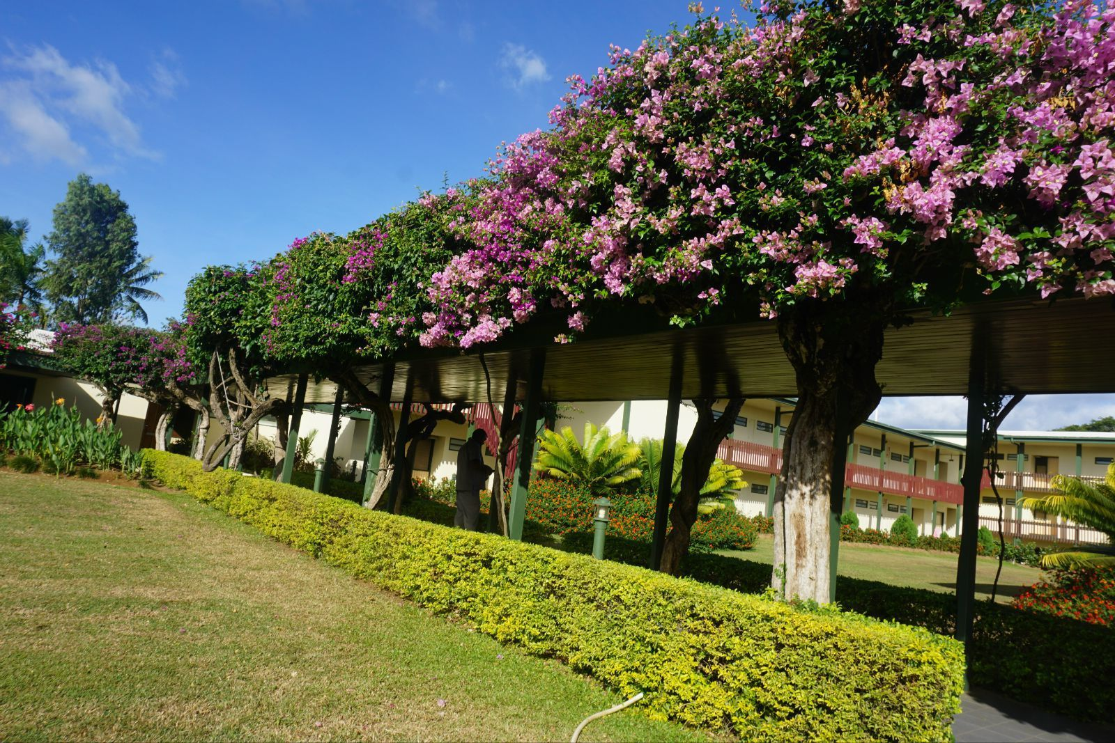 bula,美丽的斐济